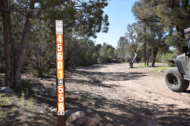 Wheeler Pass - Waypoint 19: Intersection