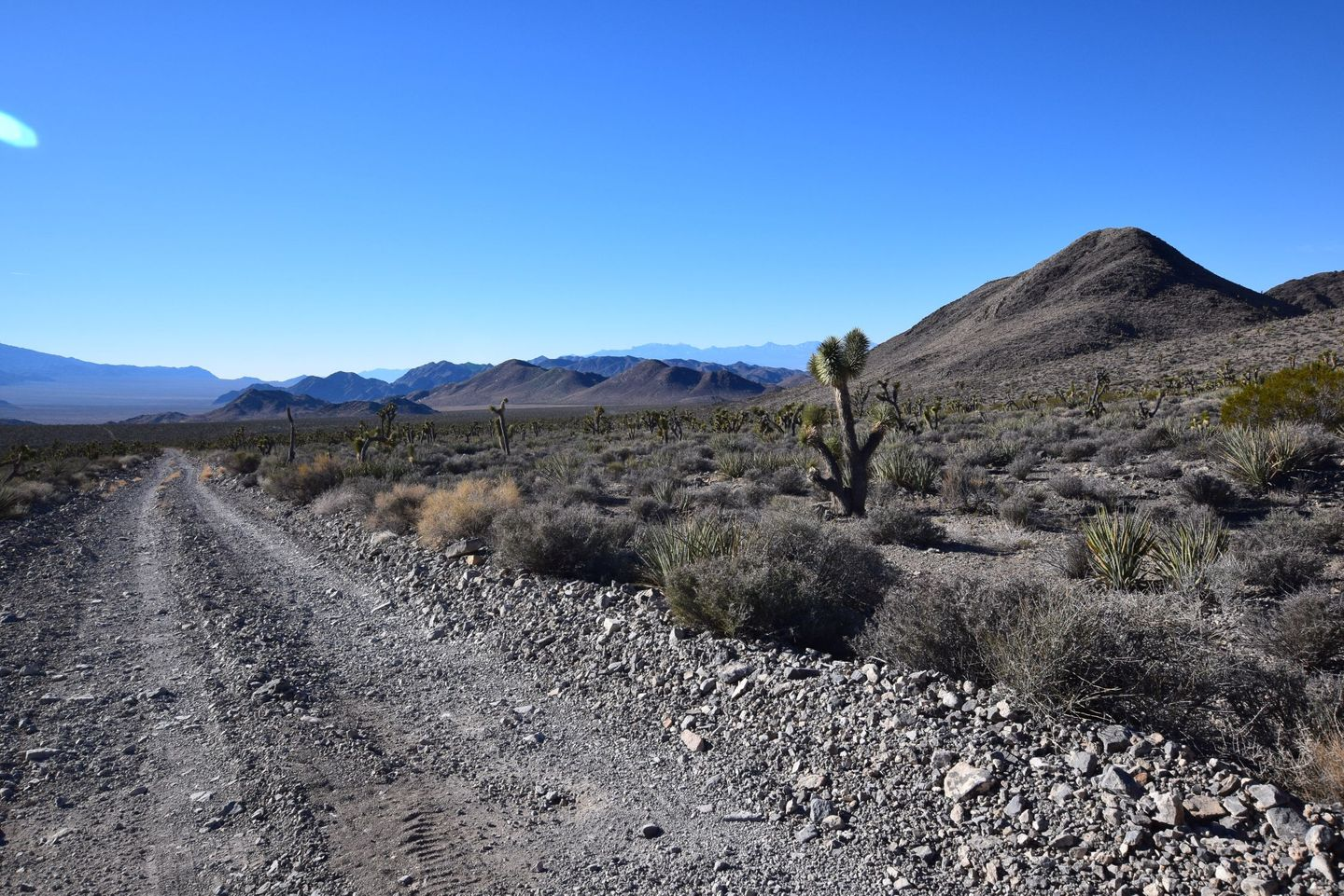 Trail Review: Alamo Road