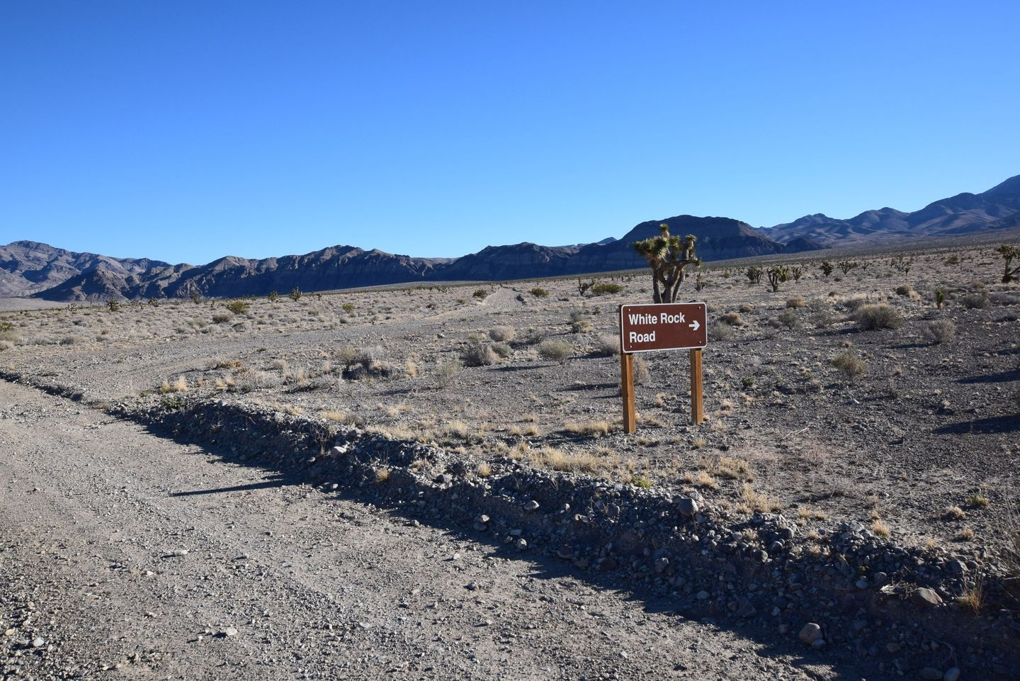 Alamo Road - Waypoint 7: White Rock Road