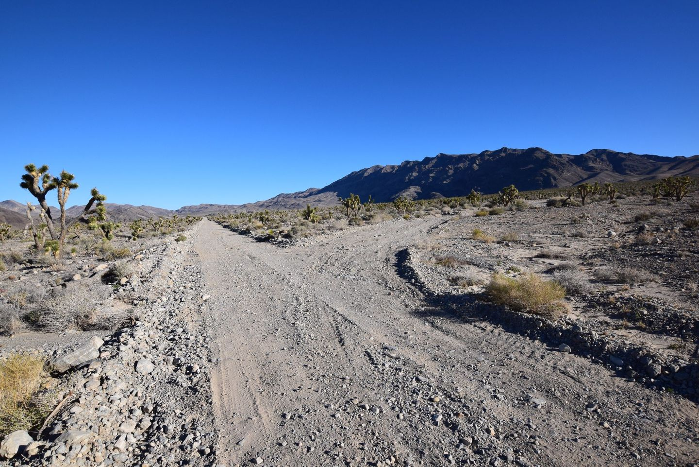 Alamo Road - Waypoint 8: Deadhorse Road