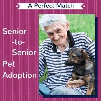 Senior Dogs for Seniors