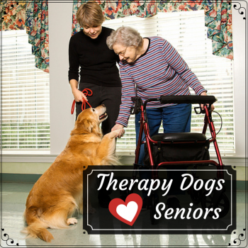 What is a therapy dog