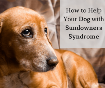 How to Help Your Dog with Sundowners Syndrome