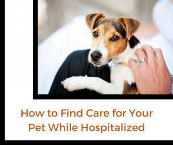 How to Find Care for Your Pet While Hospitalized