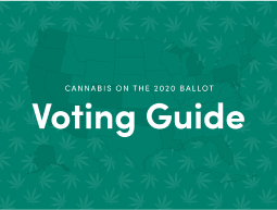 cannabis voting guide