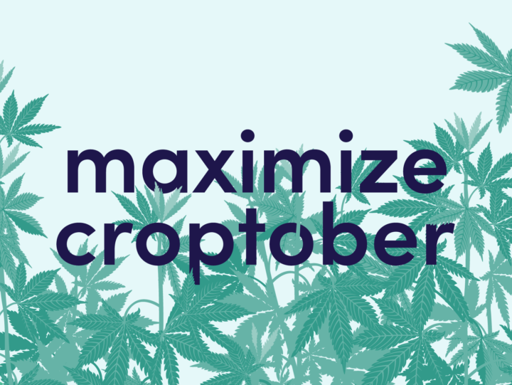 cannabis october