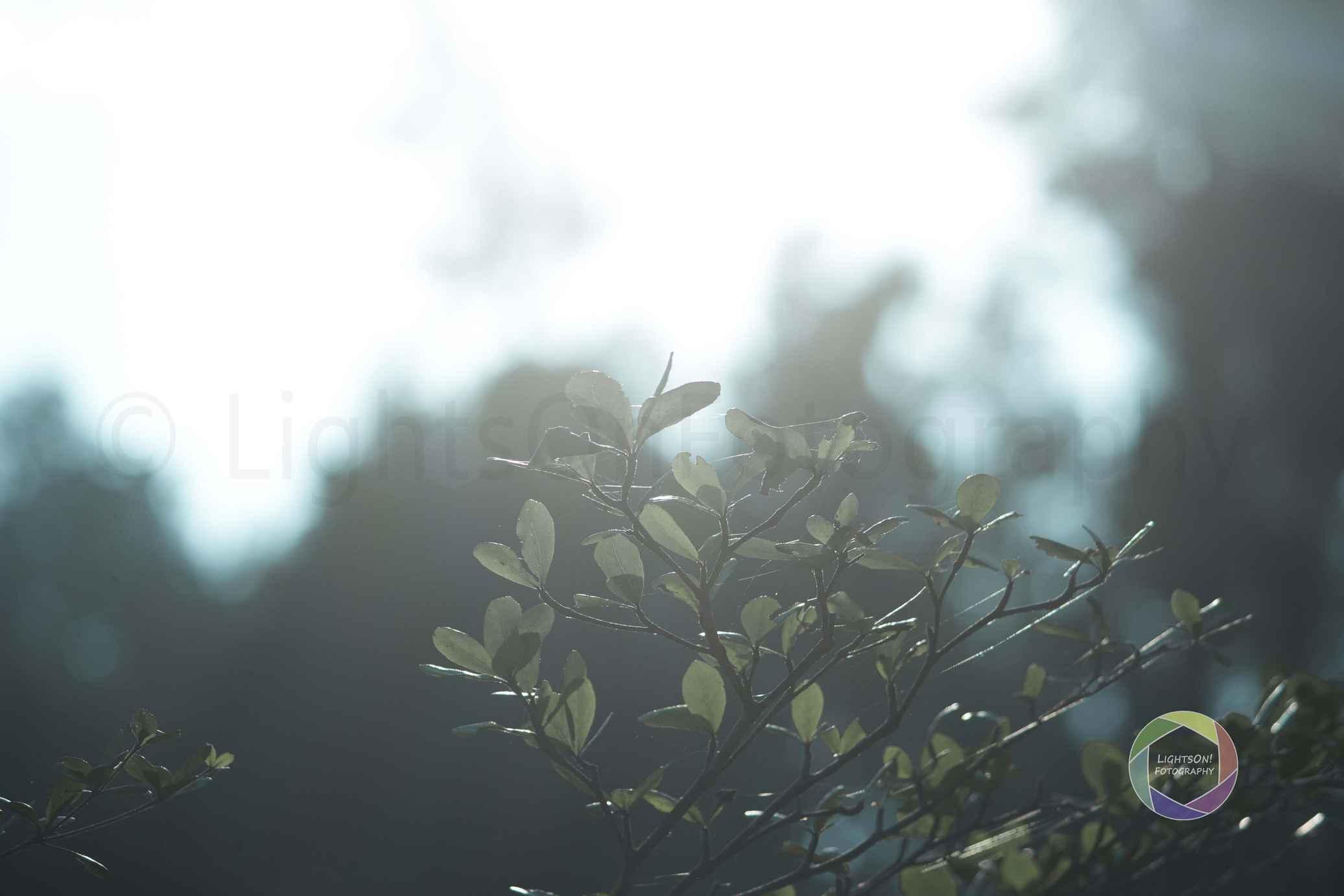 botanical-garden-araku