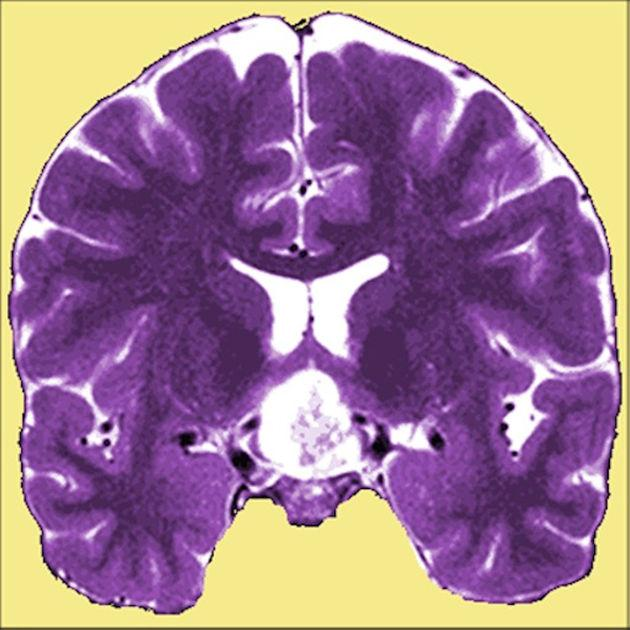 Neuro Toolkit