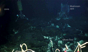 The COVIS instrument is positioned on the seafloor to measure heat output from both chimneys (Mushroom) and diffuse hydrothermal fluids on the seafloor.