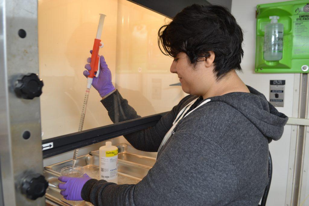 UW undergrad Katie Gonzalez fixes samples from the Tucker net tows. Credit: Y. Meghare, University of Washington, V18