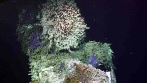 """The summit of the 9 meter chimney in the International District Hydrothermal Field is covered in a beautiful tubeworm bush, limpets, and blue ciliates. It now hosts two """"chimlets"""" venting high-temperature clear fluids. Credit: UW/NSF-OOI/WHOI, V18."""