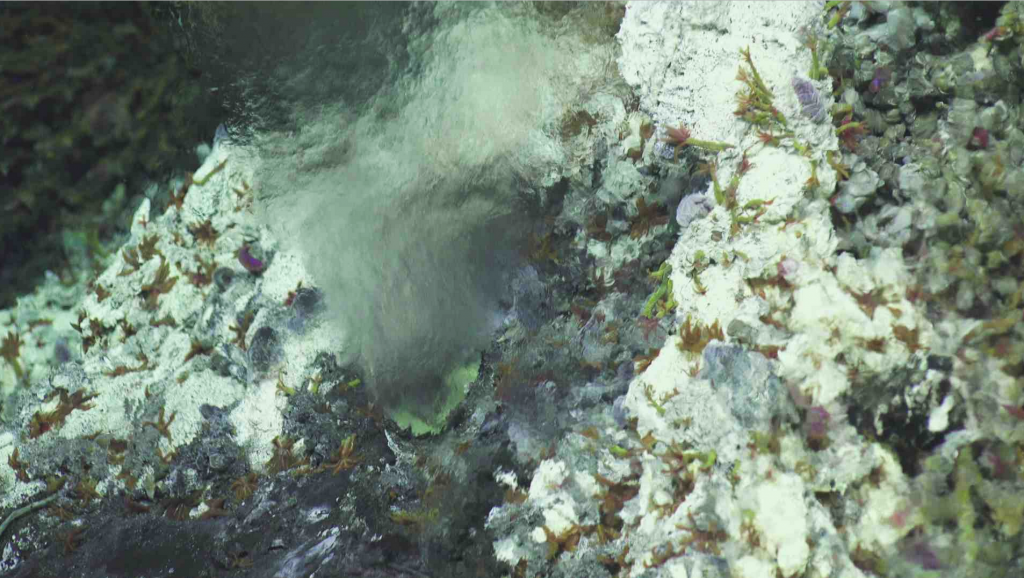 The orifice at the base of the hydrothermal chimney called Mushroom is marked by a strong jet of high temperature hydrothermal fluid. Sulfide worms, scale worms and limpets are bathed in a mixture of the high temperature fluid and seawater. Credit: UW/NSF-OOI/WHOI, V18.