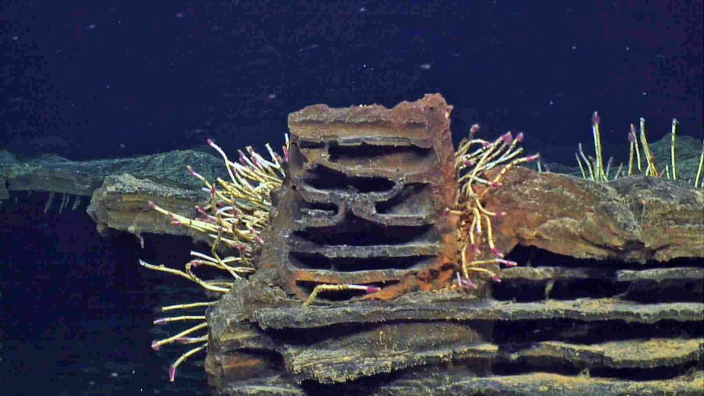 Tube worms with red plumes grow on the side of an odd basalt formation formed as part of a fossilized lava lake at the summit of Axial Seamount in 2011. Depth is ~1500 m. UW/OOI-NSF/WHOI; J2-980; V17.