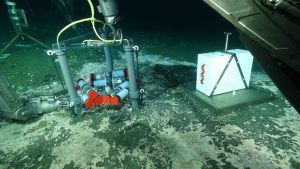 Hagfish investigate flow meters called Mosquitos at methane seeps at Southern Hydrate Ridge (water depth ~800 m). Data from these instruments allow calculation of the flux of fluids into and out of sediments at this gas hydrate site marked by thick bacterial mats and abundant clams. Credit: UW/NSF-OOI/WHOI; V16.