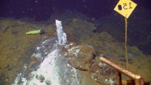 A temperature probe (HOBO) installed by NOAA last year in the hydrothermal vent 'Diva' is now enclosed in the sulfate-rich, white mineral called anhydrite. The high temperature fluids at this site host very high concentrations of carbon dioxide being outgassed from the underlying magma chamber. Credit: UW/OOI-NSF/WHOI; Dive J2-912, V16.