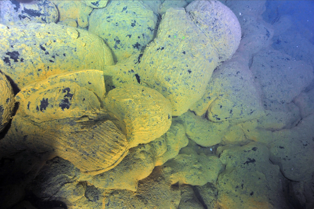 Thick, orange bacterial mats coat 3 month old pillow basalts ceated during the eruption of Axial Seamount that started April 24th, 2015. Green lasers are 10 cm apart. Credit: NSF-OOI/UW/ROPOS; V15.
