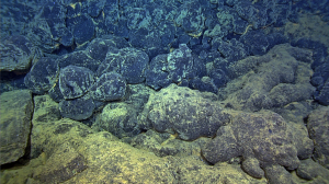 Black, glassy pillow basalts erupted as part of the April 24th, 2015 event overly older, lightly sedimented flows along the northern rift zone of Axial Seamount. Credit: NSF-OOI/UW/ROPOS; V15.
