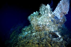 El Gordo, at International District, is a site for OOI-RSN instrumentation. Here, its venting hydrothermal fluid can be seen. The brown tubes are stressed tubeworms covered in filamentous bacteria. Photo credit: NSF-OOI/UW/CSSF; Dive R1719; V14.