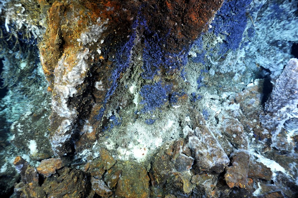 Ciliates, purple single-celled Protists, colonize the base of Escargot hydrothermal vent. Photo credit: NSF-OOI/UW/CSSF; Dive R1719; V14.