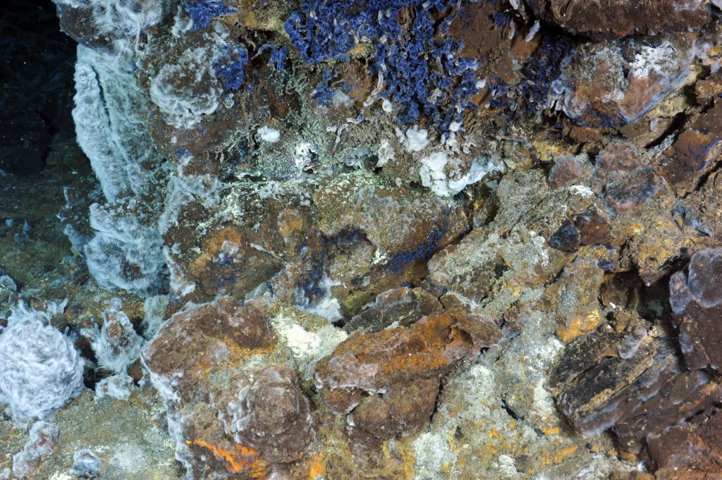 Beautiful blue ciliates (protists) line the base of the hydrothermal vent called El Gordo. Photo Credit: NSF-OOI/UW/CSSF; Dive R1713; V14