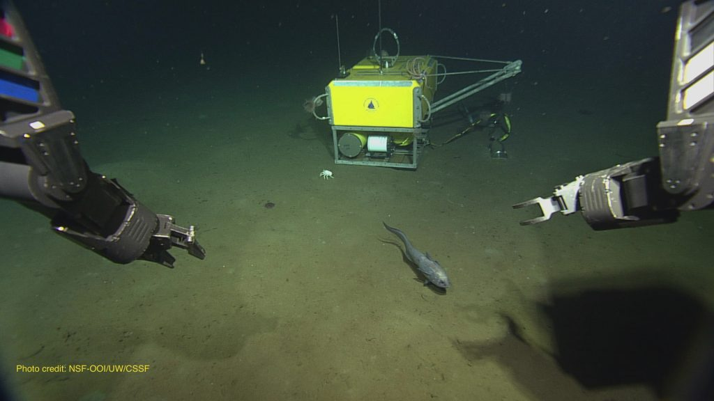 ROPOS was sent down to retrieve a seismometer at the end of VISIONS '13 Leg 3  	Photo credit: NSF-OOI/UW/CSSF