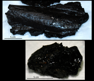 Samples of fresh basalt were collected from Axial Seamount's caldera floor.  When fresh, the outer surface of the rock is glassy due to the very rapid cooling and crystallization that occurs when the hot lava comes in contact with the 2oC seawater.  This glass - known as obsidian - is very sharp and crumbles easily. (Photos by Leslie Sautter)