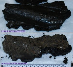 Iron-rich basalts quickly oxidize in the O2-rich atmosphere once on deck. (Photos by Leslie Sautter)
