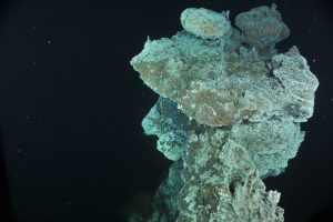 The top of the the Escargot Vent in the International District Hydrothermal Vent Field at Axial Seamount. (credit: OOI/UW/CSSF)