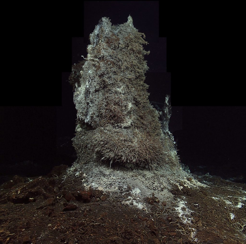 The Mushroom hydrothermal chimney at the ASHES vent field, hosts dense communities of limpets, a variety of worms (palm, tube, scale, sulfide), and filamentous bacteria. The chimney rises ~ 4 m above the seafloor. This mosaic was compiled by M. Elend, University of Washington from several high definition images.