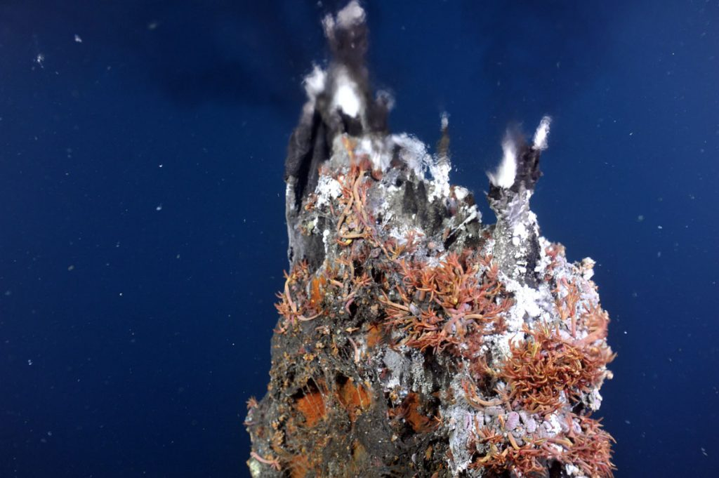 Small back smoker spigots on the summit of the black smoker structure called El Guapo in the International District hydrothermal field. which in 2011 was venting boiling fluids prior to the seafloor eruption in April 2011.
