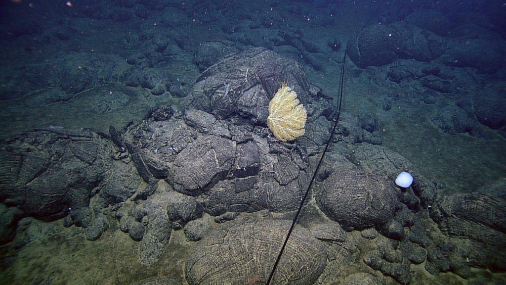 Pillow basalts, interspersed with sediment ponds, mark old lava flows on the flanks of Axial Seamount. The rocks and sediment are host to occasional deep sea corals.