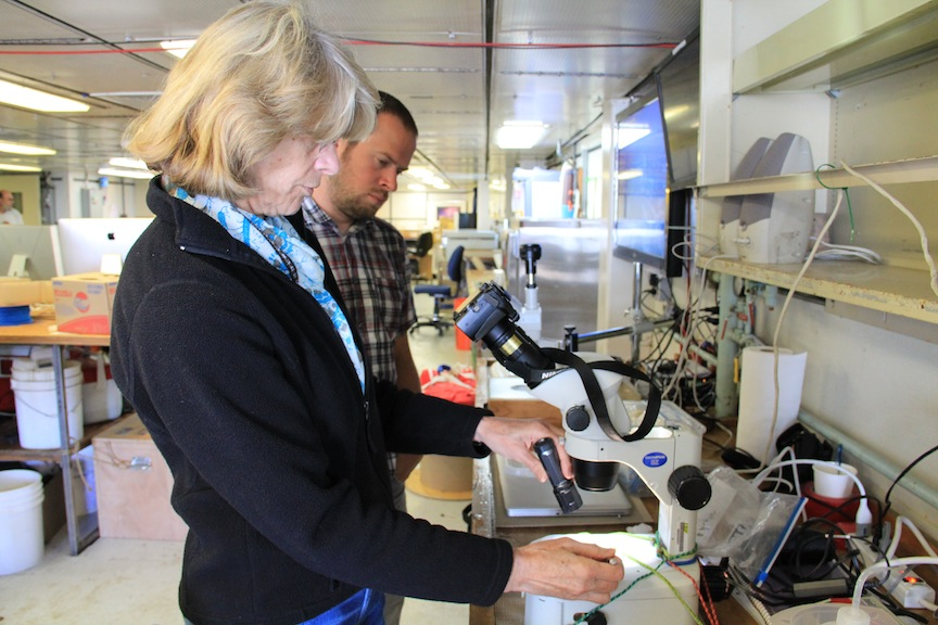 Kendra Daly, OOI-RSN senior project scientist, and Chris Holm, OSU field engineer, look at plankton collected from a net tow under a microscope. (phot by Allison Fundis)