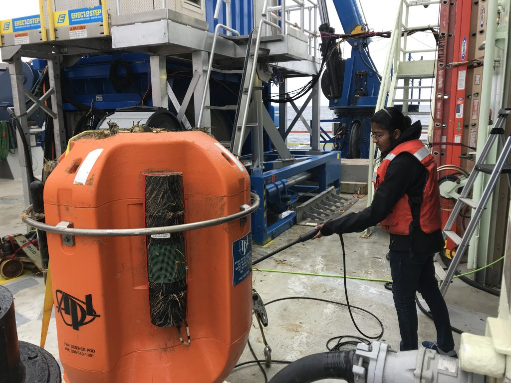 VISIONS 19 student Ramya Ravichandran Asha cleans off a recovered profiler pod coated in biofouling after a 1-year deployment. Image Credit: M. Vardaro, University of Washington, V19