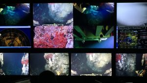 Imaging healthy tubeworms on the hydrothermal chimney 'Inferno' as viewed  Jason Control Van. Credit: Ramya Ravichandran Asha, University of Washington, V19.