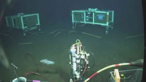 A rattail fish swimming near the Axial Base junction boxes during a CTD deployment. Photo credit: UW/NSF-OOI/WHOI; V19