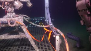 A wolf eel swimming alongside the undervator as Jason prepares to recover the Oregon Shelf digital still camera (covered in biofouling). Photo Credit: UW/NSF-OOI/WHOI, V19