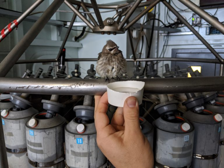 Supporting a young Cedar Waxwing that is resting atop the CTD rosette onboard the R/V Thompson. Credit: I. Borchert, University of Washington, V20.