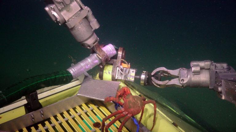 Crab Investigating Bridgle Attachment PN1B sulis_20210805190935