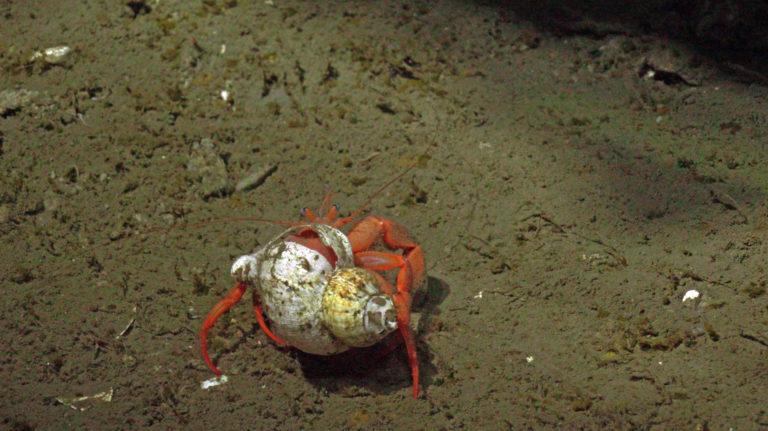 Hermit Crab SHR-1363_sulis_20210814175656