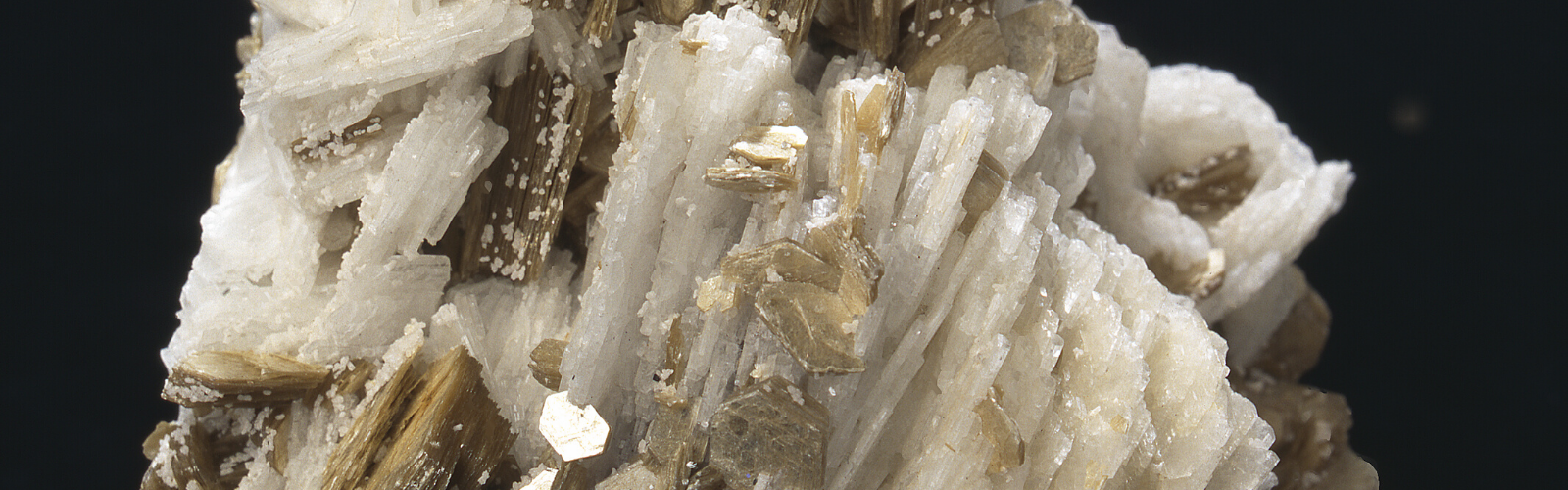 Close up view of a mica crystal with gold and white shimmery streaks running throughout on a black background.
