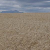 Crop mountains
