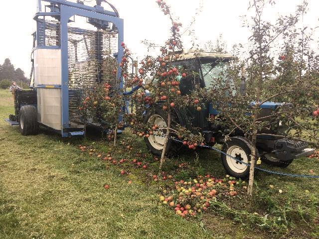 Tractor pulls harvesting machine through orchard.