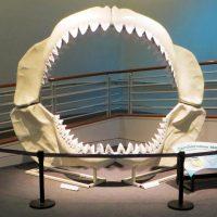 Savage Ancient Seas Fossil