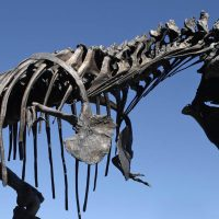 Blue sky can bee seen through the bronze T. rex fossil sculpture known as Big Mike.