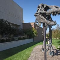 A front view of the head of Big Mike, the bronze T. rex, in front of the museum.