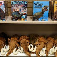 Museum Store Dinos & Mammals