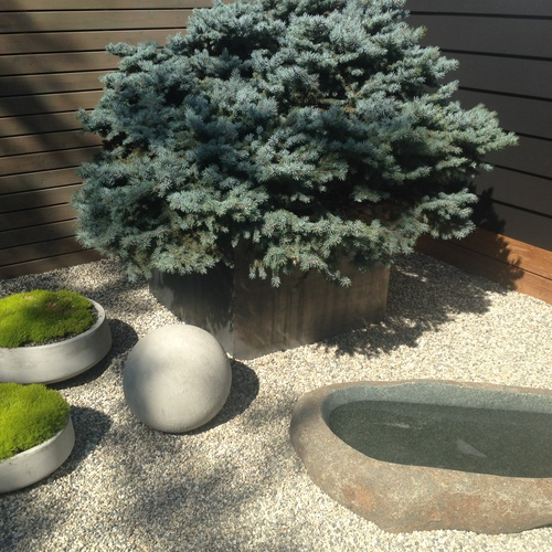 Planting bird bath dog bowl water feature