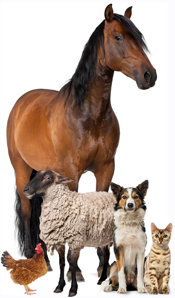 Pet Food Supply Store - Moore Equine Feed & Pet Supply In