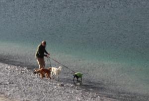 Dogs Waterside