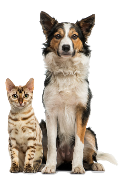 Pet Food Supply Store - Marlin's Raw Superfood For Pets In